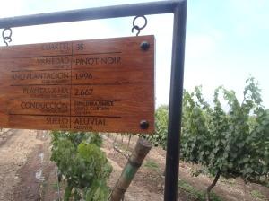 Parreiral de uva Camembert