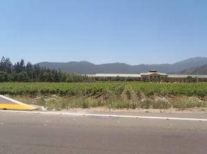 Vinícolas e mais vinícolas
